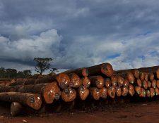 El problema de la deforestación en África está causado mayormente por la industria maderera y no por las prácticas agrícolas, dice McClean.
