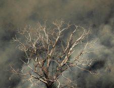 Vista aérea de un árbol carbonizado, este viernes, en la selva amazónica de Porto Velho, Rondonia, Brasil. (Foto Prensa Libre: EFE)