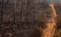 AME162. PORTO VELHO (BRASIL), 25/08/2019.- Fotografía tomada este domingo que muestra una de las áreas destruidas por fuego en la selva amazónica, en el estado de Rondonia (Brasil). El norteño estado del Amazonas oficializó este domingo el pedido para que las Fuerzas Armadas de Brasil actúen en el combate de los incendios que golpean la región amazónica, por lo que ya son siete los estados brasileños que han solicitado formalmente la ayuda de los militares. EFE/Joédson Alves.
