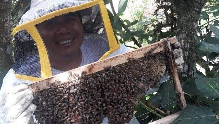 El rescate de abejas es fundamental para la naturaleza, aseguran expertos. (Foto Prensa Libre: Cortesía Bee Hub Guate)
