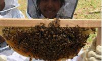 Las abejas rescatadas son llevadas a un santuario. (Foto Prensa Libre: Cortesía Bee Hub Guate)