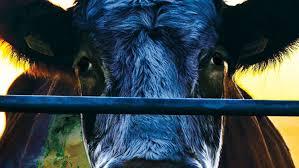 Cowspiracy planetea que el consumo de carne es uno de los mayores causantes de problemas de índole ambiental. (Foto Prensa Libre: Netflix)