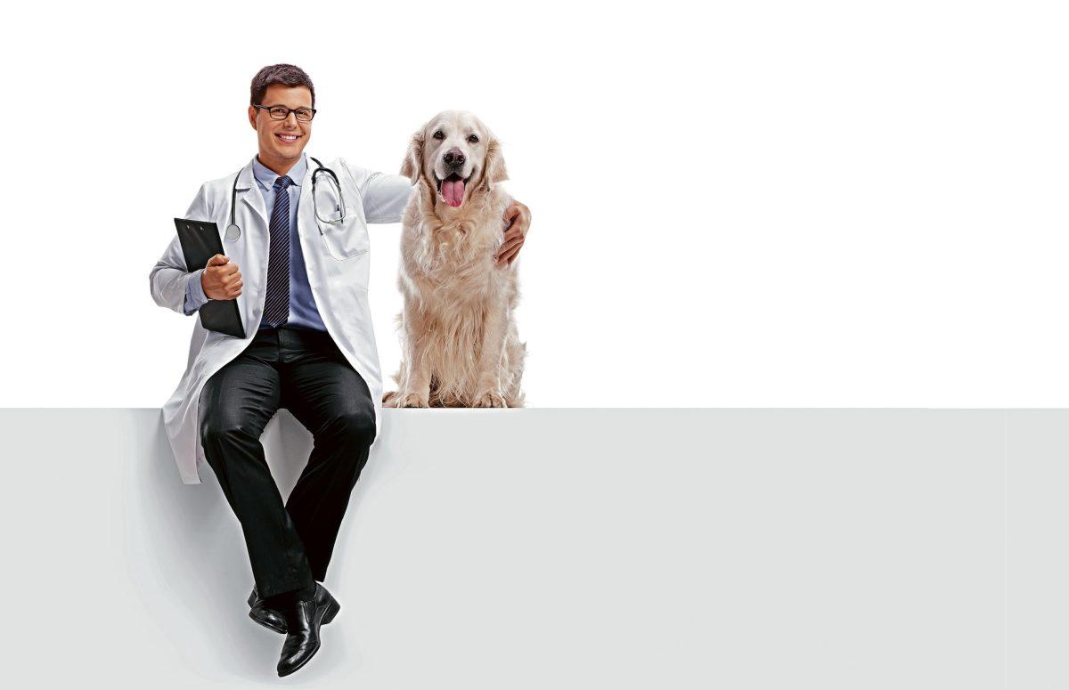 ¿Con que frecuencia debo llevar a mi mascota al veterinario?