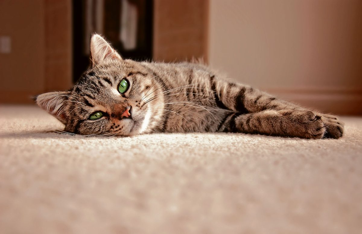 Lo que debes saber si tienes un gato