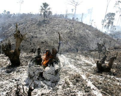 El Parque Nacional Laguna del Tigre, en Petén, ha sido afectado por incendios forestales durante los últimos años. (Foto: Hemeroteca PL)