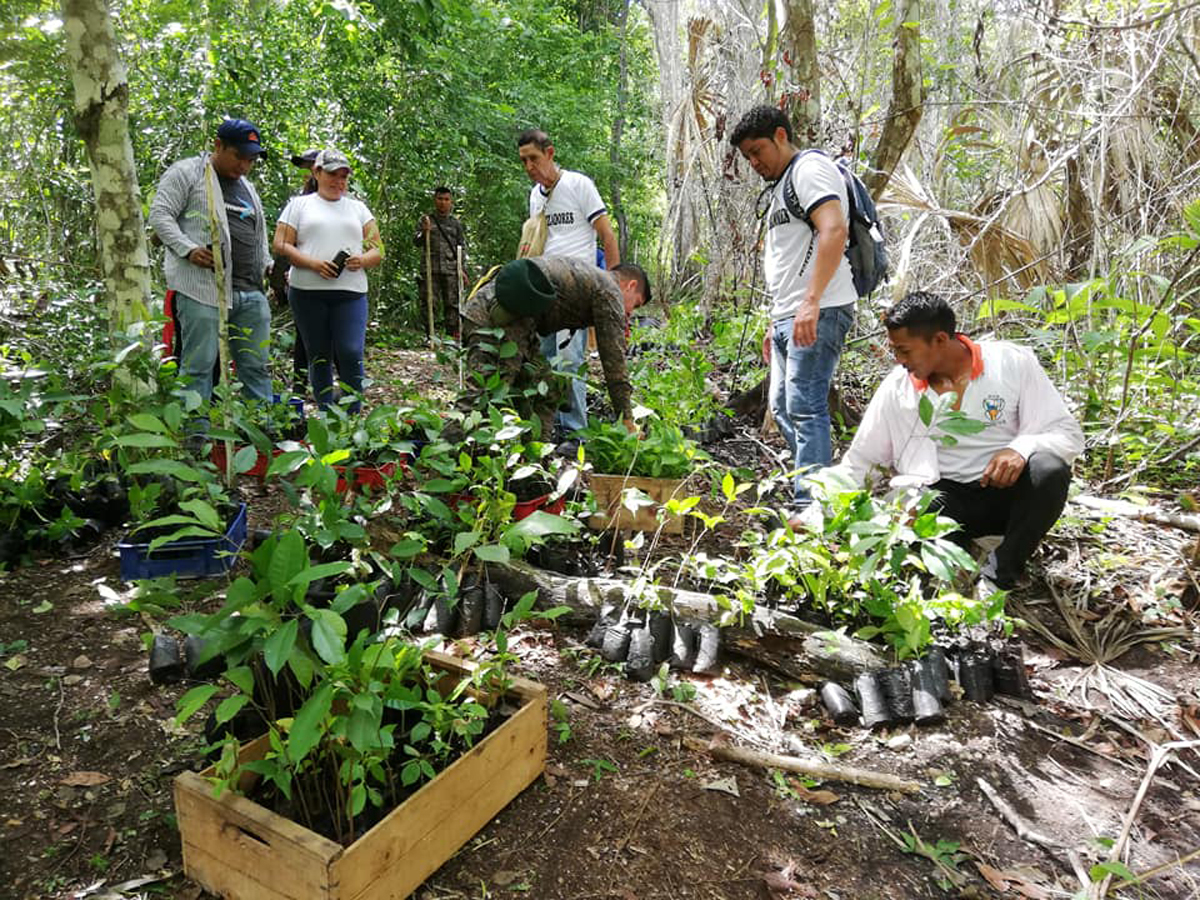 Plantan más de tres mil árboles para restaurar áreas devastadas por incendios forestales