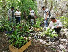 Para recuperar áreas afectadas por incendios forestales del parque ecológico Arístides y Adelita Calvani, en San Andrés, Petén, grupos ambientalistas y estudiantes reforestan la zona.  (Foto Prensa Libre: Dony Stewart)