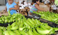 La Planta empacadora de banano y platano denominada, Word Direct en La Blanca, la cual,opera en Oc˜s, San Marcos, esta  empresa da trabajo a Guatemaltecos del lugar y  estˆ exportando directamente al mercado de Estados Unidos. Edgar Octavio Giron eogc.