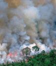Los artistas colocaron esta imagen en las redes sociales para pedir prontas acciones ante los incendios en la Amazonía.