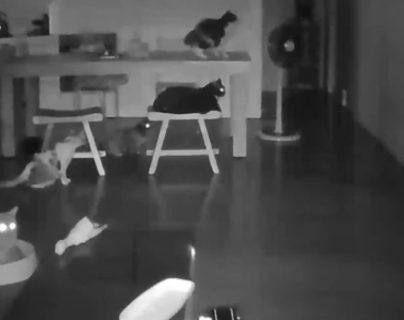 Gatos podrían alertar sobre terremotos. (Foto: Facebook/SismologíaMundial