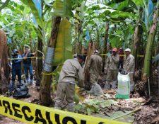El primer simulacro para evaluar la capacidad de respuesta, manejo y control ante posibles brotes del Fusarium se realizó en una finca de Los Amates, Izabal. (Foto Prensa Libre: Dony Stewart)