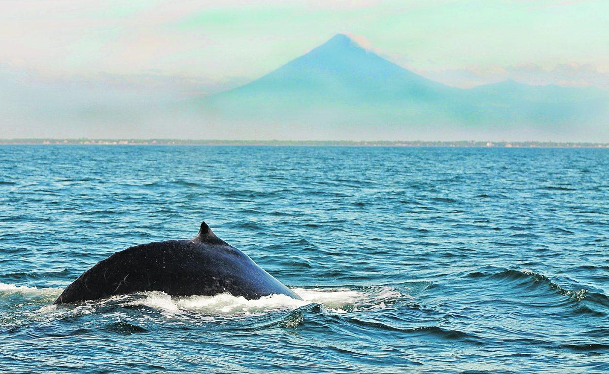 Así fue como turistas ayudan a ballena que quedó atrapada en las playas de Tulate