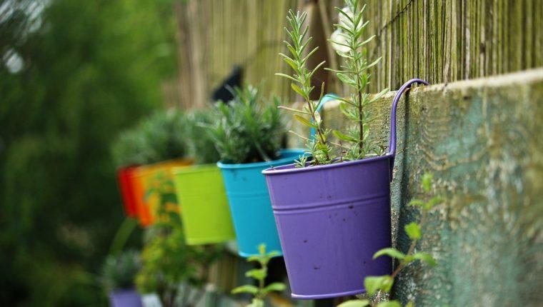 Las plantas tienen diversos beneficios para la salud. (Foto Prensa Libre: Servicios).