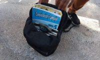 Un policía muestra la granada que llevaba consigo el menor. (Foto Prensa Libre: PNC)