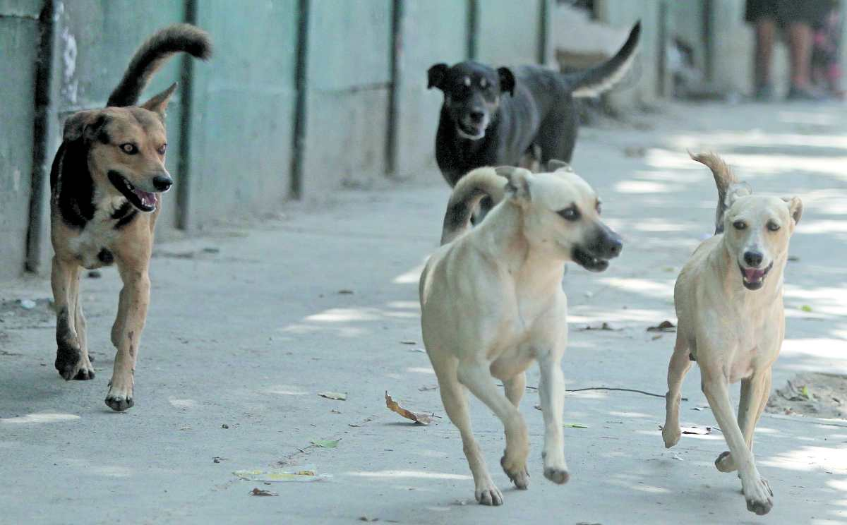 Ataques de perros causan preocupación; en lo que va del año se registran 261 casos en la capital