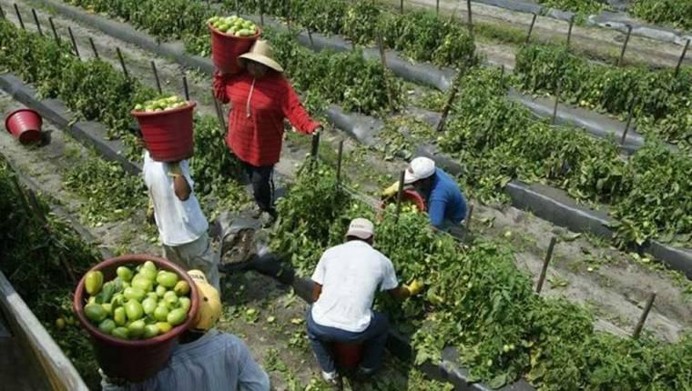 Reclutadoras de migrantes para visas agrícolas deben ser reguladas por el gobierno, dice OIT