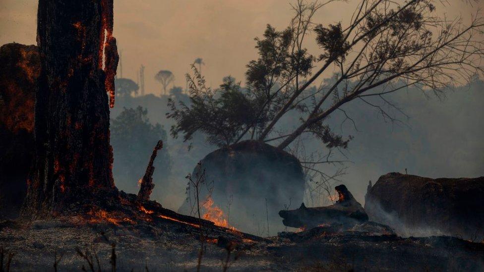 """Incendios en el Amazonas: """"Ha habido años de fuegos similares o peores que los de 2019"""", el científico Daniel Nepstad responde las preguntas de los lectores de BBC Mundo"""