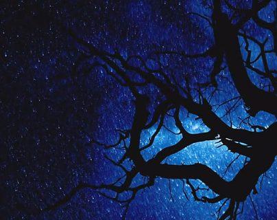 ¿Qué hay en el firmamento... y qué, en las ramas del árbol?