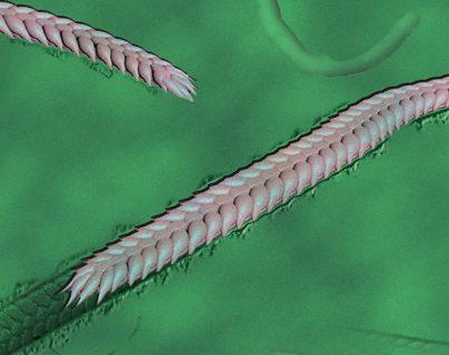 Esta ilustración recrea el aspecto que podría haber tenido el milpiés.
