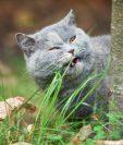 ¿El hábito de comer hierba entre nuestras mascotas se debe a problemas de salud?