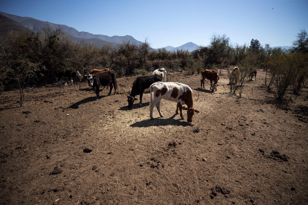 Sequía en la primera parte de la época lluviosa e inundaciones en la segunda: el clima fue inclemente con los agricultores, también este año