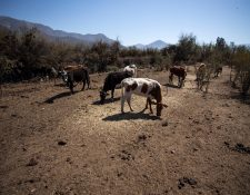 El aumento de la temperatura es un fenómeno mundial. (Foto Prensa Libre: Hemeroteca PL)