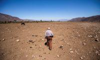 -FOTOGALERÍA- CH01. PUTAENDO (CHILE), 28/09/2019.- El ganadero chileno Fernando Enríquez camina por sus terrenos afectados por la sequía, el 24 de septiembre de 2019, en Putaendo (Chile). Miles de vacas, caballos y ovejas mueren de sed e inanición debido a la sequía que asola el valle de Putaendo, en el centro de Chile, cuyas tierras se han convertido en una inmensa fosa común de animales ante la resignación de los ganaderos, que no pueden hacer otra cosa más que enterrarlos. EFE/Alberto Valdes