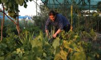 Diman Fatah, the 59-year-old owner of Arbil's first female-run plant nursery, tends to her plants at her nursery in Arbil, the capital of the northern Iraqi Kurdish autonomous region, on August 8, 2019. - In Iraq, only 15% of working-age women are in the labour force, one of the lowest rates in the world, according to a 2018 demographic survey by the regional government. Among employed women in Kurdistan, up to 75% work in the public sector, making female entrepreneurs an especially rare breed. (Photo by SAFIN HAMED / AFP)