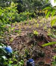 Plantaciones de hoja de coca localizadas en Izabal. (Foto Prensa Libre: MP)