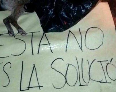 Los perros fueron encontrados muertos en varias comunidades de Nebaj, Quiché. (Foto Prensa Libre: Héctor Cordero)