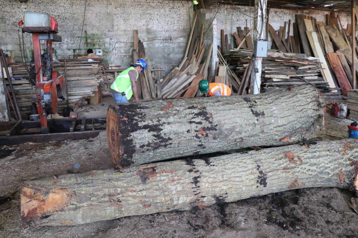 Bosques desaparecen ante el incremento de talas ilegales y sectores exigen controles en ventas de madera