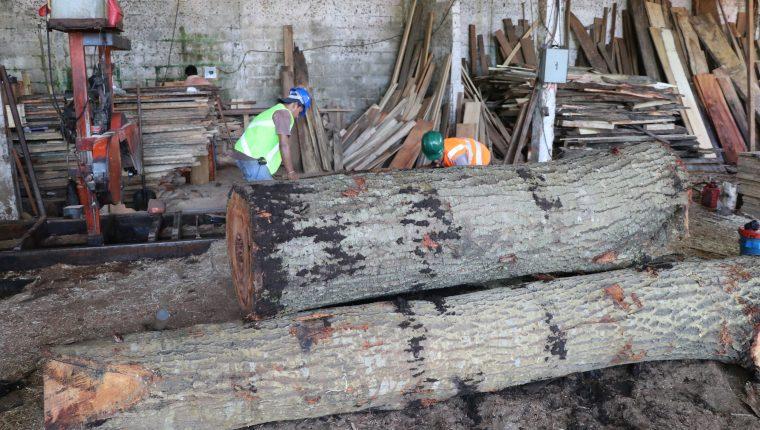 Se calcula que el 50 por ciento de la madera que se comercializa en el país proviene de talas ilegales. (Foto Prensa Libre: Carlos Paredes)