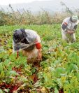 Las empresas del sector agropecuario deberán tomar medidas de prevención del contagio de covid-19. (Foto Prensa Libre: Hemeroteca)