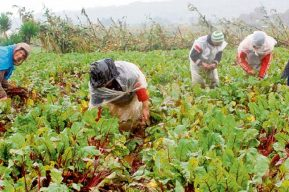 Maga explica al sector agropecuario qué hacer al detectar casos de coronavirus