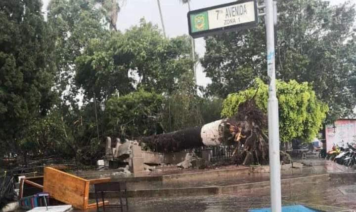 Un árbol cayó debido al fuerte viento que se registró en una tormenta en la cabecera departamental de Jalapa. (Foto Prensa Libre: Conred)