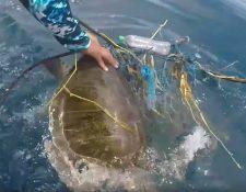 No fue fácil liberar a esta tortuga del plástico y otros materiales.