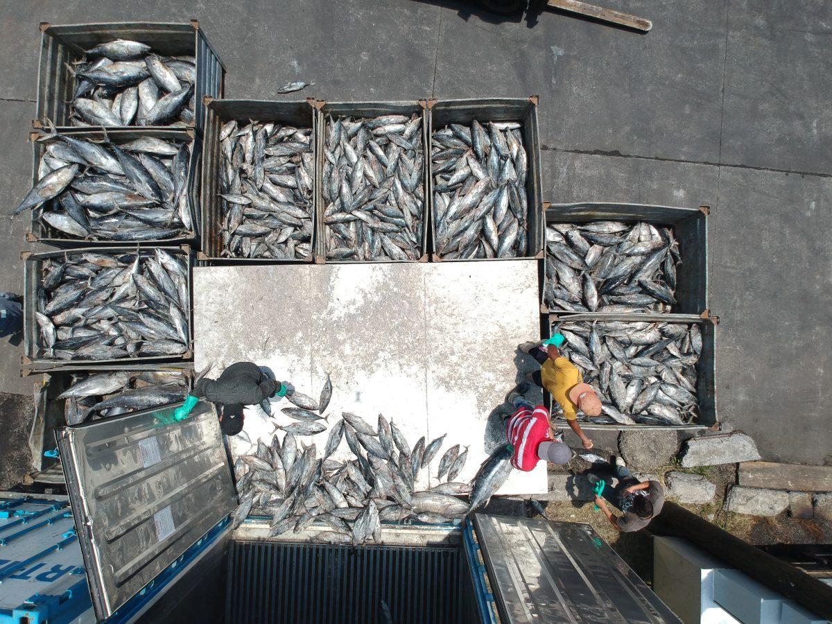 Capitales: Invierten Q23 millones en planta que producirá harina y aceite de pescado en Escuintla