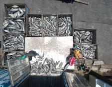 La filial de la española Rianxeira en Guatemala invirtió Q23 millones en una nave industrial que utilizará los subproductos del atún y de los pescadores artesanales. (Foto Prensa Libre: Carlos Hernández Ovalle)