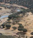 La sequía y tala de árboles es evidente en varias regiones del mundo. (Prensa Libre: EFE)