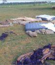 En 2018 hubo 242 fincas invadidas según la Secretaria de Asuntos Agrarios (SAA), que representó aproximadamente 164 mil hectáreas de territorio usurpado, según la Camagro. (Foto Prensa Libre: Hemeroteca)