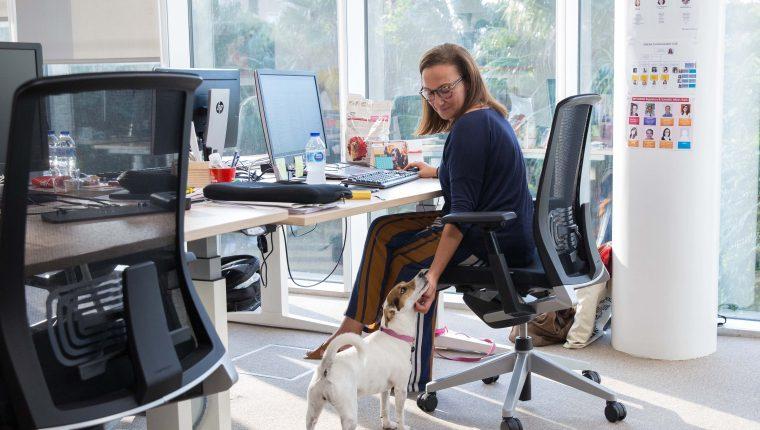 Mascotas en la oficina