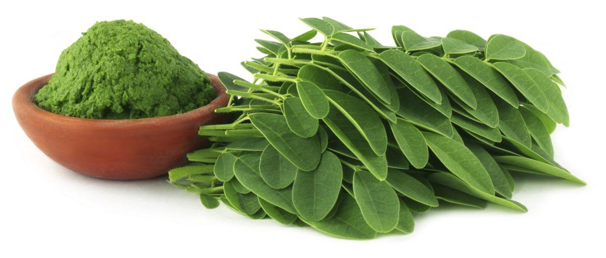 La moringa es una de las plantas más nutritivas
