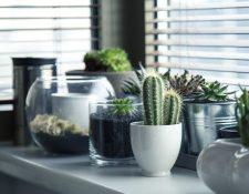 Que el espacio no sea una excusa para decorar su casa con plantas. (Foto Prensa Libre: Servicios).