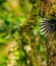 El hogar del quetzal y otras especies está en peligro y es el mensaje del documental Serpiente Emplulmada, el documental de Ricky López.