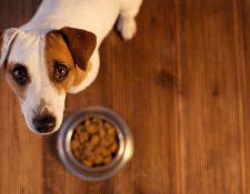 La alimentación de nuestra mascota es fundamental para su salud. (Foto Prensa Libre: Servicios).