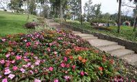 En parques de la ciudad serán introducidas plantas alimenticias. (Foto: Hemeroteca PL)