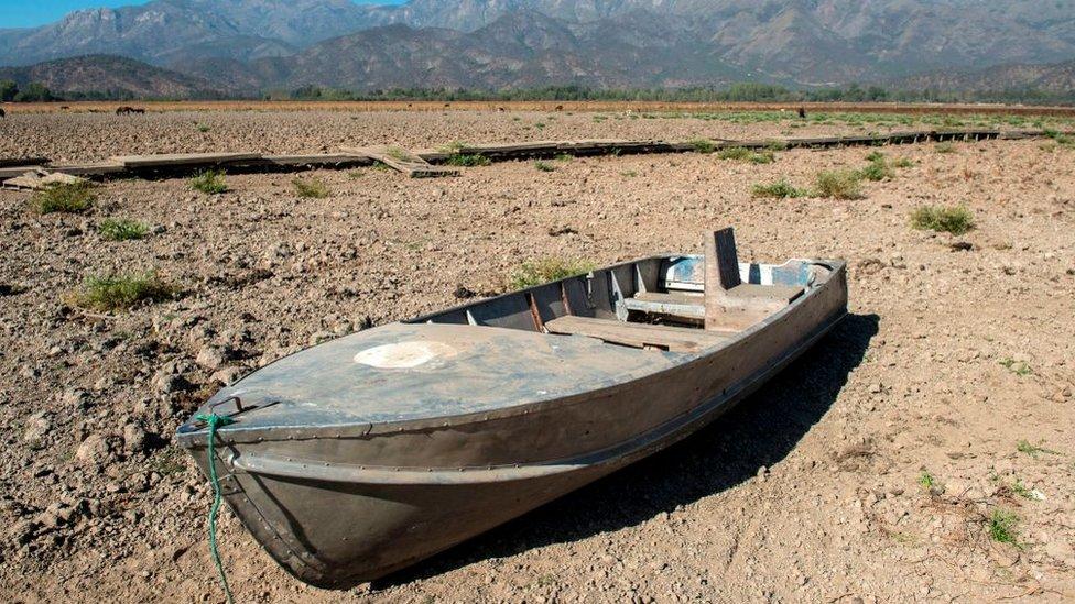 """""""Megasequía"""" en Chile: las catastróficas consecuencias que está teniendo la mayor crisis del agua de los últimos 50 años"""