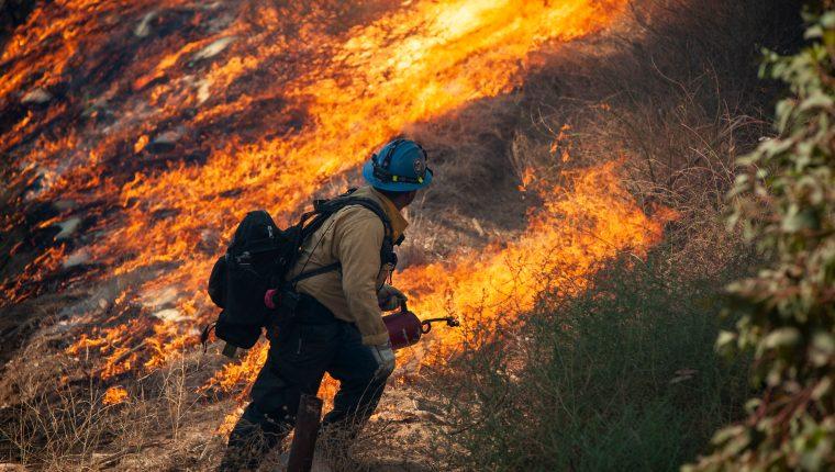 Un bombero forestal utiliza una antorcha de goteo para contrarrestar el incendio de Saddleridge en Sylmar, California, EE. UU. Fotografía Prensa Libre: EFE