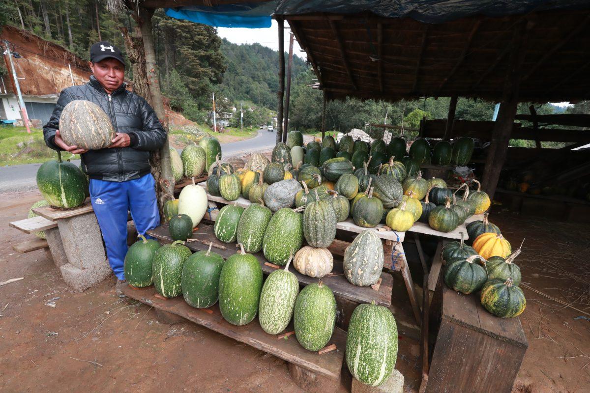 Venta de ayotes y chilacayotes ayuda a la economía familiar en Momostenango y San Francisco El Alto