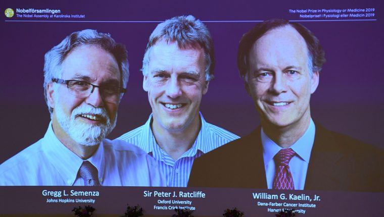Los investigadores premiados por sus avances en la medicina. (Foto Prensa Libre: AFP)